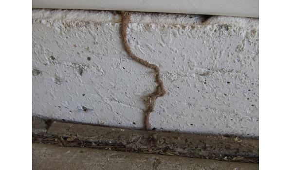 Phương pháp khảo sát mối trong tường nhà bạn