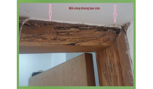 Quy trình diệt mối cho khung cửa gỗ hiệu quả